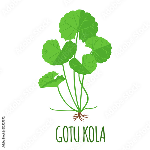 Fotografia  Gotu Kola icon in flat style isolated on white.