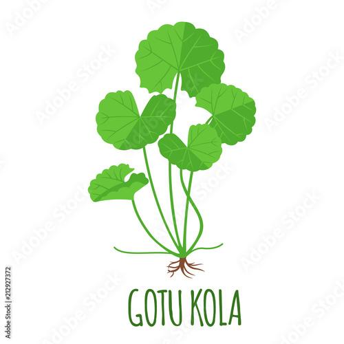 Photo  Gotu Kola icon in flat style isolated on white.