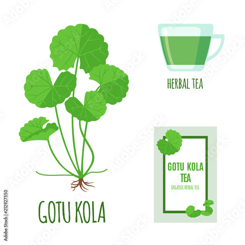 Fotografia  Gotu Kola set with tea package and cup of tea in flat style isolated on white
