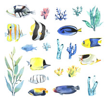 A Set Of Tropical Fish, Coral And Algae, In A Watercolor Style.