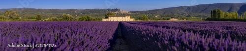 Foto auf AluDibond Aubergine lila Panorama di campi di lavanda fiorita