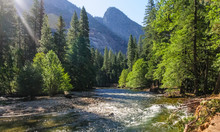 The Merced River On A Sunny Summer's Afternoon, Flowing Through Yosemite Valley. Yosemite National Park, California.