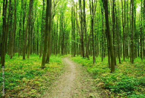 Fototapeten Wald forest green