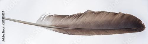 Pinturas sobre lienzo  Bald Eagle Feather - Wing Feather