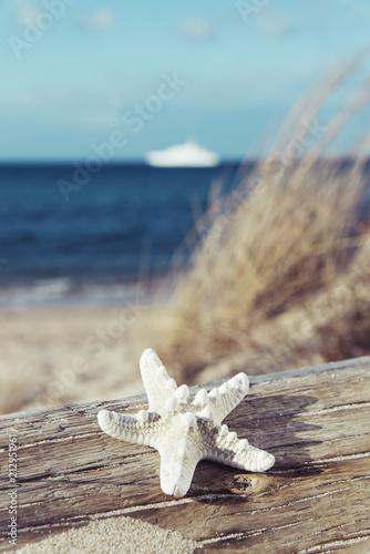 Carta da parati starfish on a tree trunk on the beach