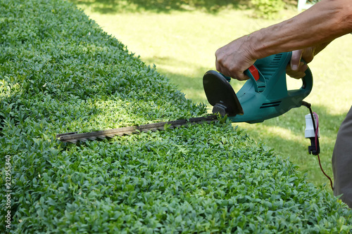 the man is cutting the boxwood bushes. landscape design Tableau sur Toile