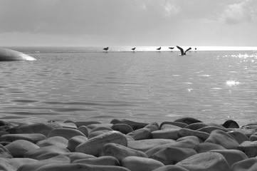 Fototapeta Abstrakcja cienie i ptaki