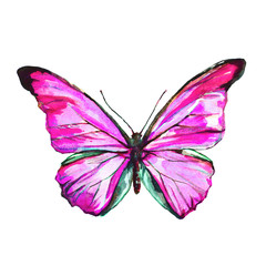 beautiful butterfly,watercolor, isolated on a white
