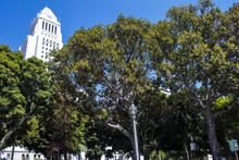 City Hall Main Building Peekin...
