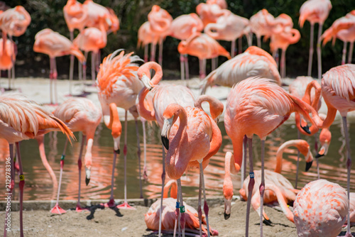 Group of Flamingos in the famous SeaWorld