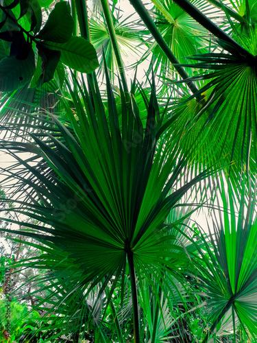 lisci-tropikalnych-lisci-widok-z-dolu
