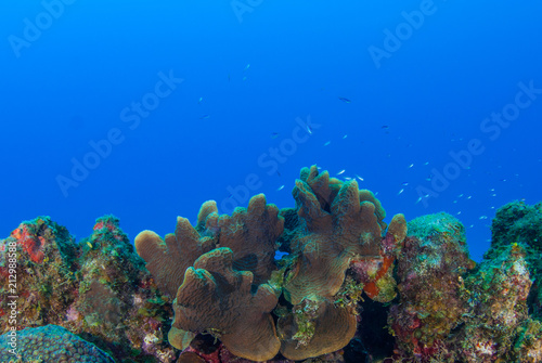 Staande foto Koraalriffen A coral seascape. This beautiful scene is part of an underwater reef in the tropical Caribbean sea. This coral is home to an abundance of marine life