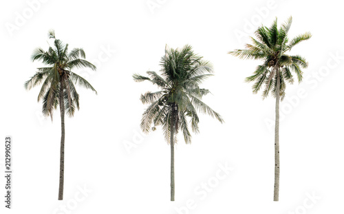 Aluminium Prints Palm tree collection three Palm coconut the garden isolated on white background