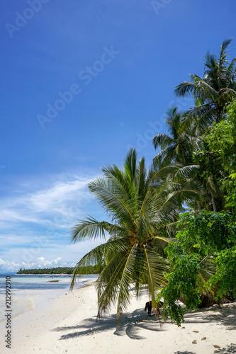 Foto op Plexiglas Caraïben DOG AT THE BEACH [SIARGAO, PHILIPPINES]