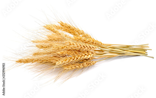 Stampa su Tela Ear of barley on white background