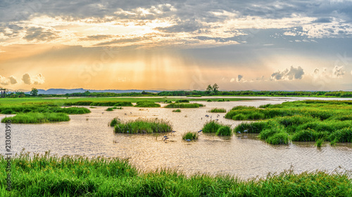 Valokuva Panoramic landscape scenery of marsh wetland full of grass with heron looking fo