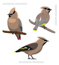 Bird Waxwing Set Cartoon Vector Illustration