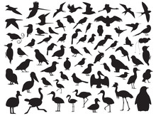 70 Bird Silhouette Vector Illu...