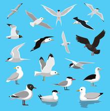 Various Seagull Tern Albatross Cartoon Vector Illustration