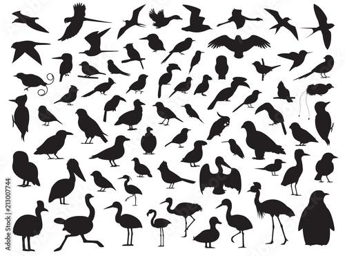 Naklejka premium 70 ilustracji wektorowych sylwetka ptaka