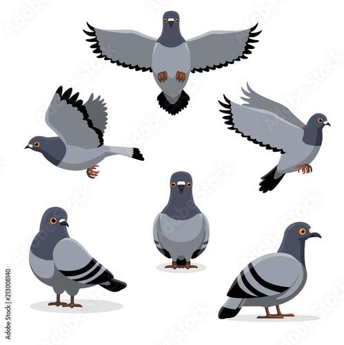 Bird Pigeon Poses Cartoon Vector Illustration Fototapete