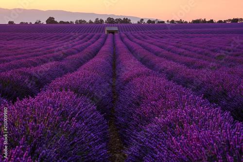 Spoed Foto op Canvas Violet Champ de lavande en fleurs, coucher de soleil. Plateau de Valensole, Provence, France.