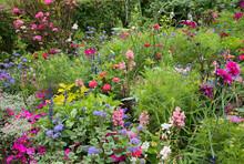 Sommerliches Blumenbeet Mit Co...