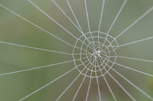 Spider Web With Dew Drops, Nor...