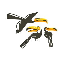 Hand Drawn Vector Abstract Cartoon Summer Time Graphic Decoration Illustrations Collection Set Art With Exotic Tropical Rainforest Toucan Birds Isolated On White Background