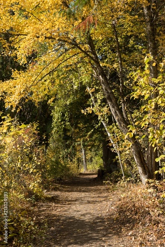 Foto op Canvas Bossen Pathway with trees in the forest