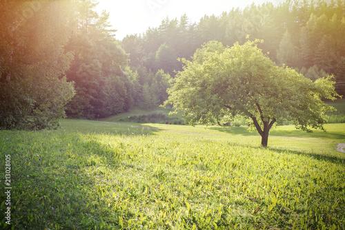 Fototapeta summer at the homestead near the forest obraz na płótnie