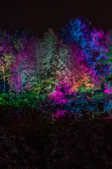 Obraz na Szkle Drzewa Lichterfest