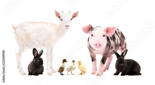 Cute farm animals standing together isolated on white background