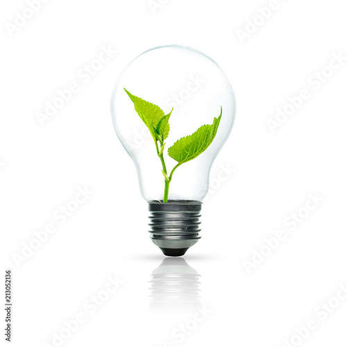 Fotomural Light bulb with sprout inside isolated on white background