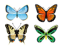 Butterflies Kinds Collection V...