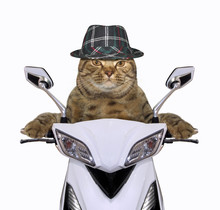 The Cool Cat In A Hat Is Ridin...