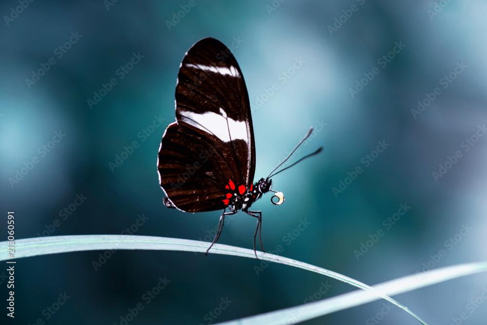Fototapeta Closeup  beautiful butterfly  & flower in the garden.
