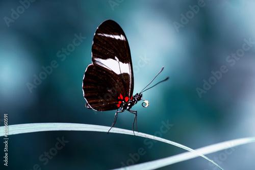 Closeup  beautiful butterfly  & flower in the garden. - 213060591
