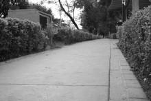 Camino Olvidado