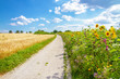 Leinwandbild Motiv Weg durch die Felder