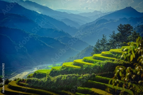 Foto auf Leinwand Reisfelder Rice fields on terraced with pine tree at sunrise in Mu Cang Chai, YenBai, Vietnam.
