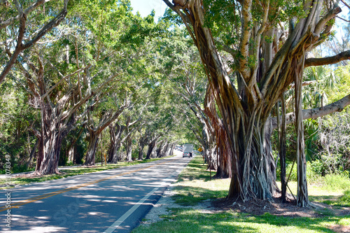Canvas Prints Khaki Banyan tree lined road approach to Jupiter Island, Florida, USA