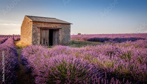 Fotobehang Lavendel Cabanon à Valensole