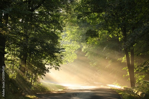 Obraz Country road through the forest on a foggy morning - fototapety do salonu