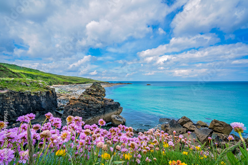 Montage in der Fensternische Cappuccino Pink sea thrift flowers on the sea coast