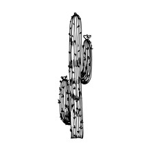 Cactus Big With Needles Vector. Isolated