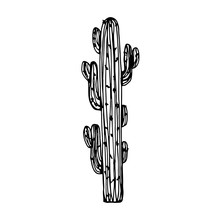Cactus Big With Needles Vector
