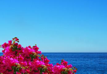 Panel Szklany Morze Mar, buganvilla y cielo. Fondo para escribir texto. Verano. Mar Mediterráneo.