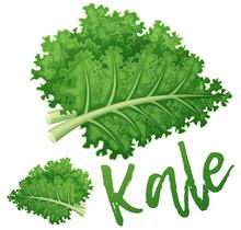 Kale Vegetable Icon. Cartoon V...