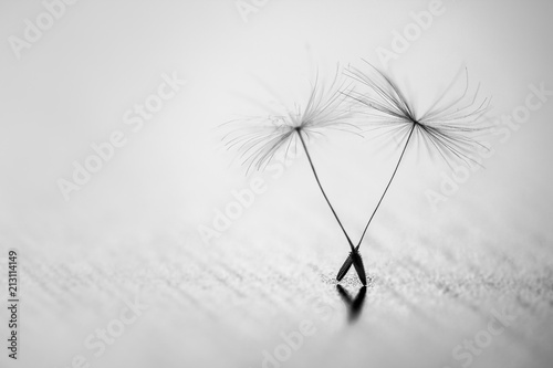 Fototapeta  Detailed shot of blow away dandelion seed